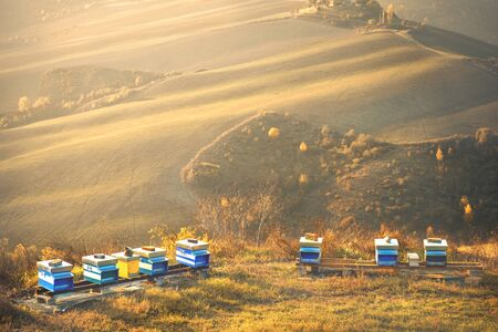 bee hives landscape background hills apiculture golden sunset light copyspace . Banco de Imagens