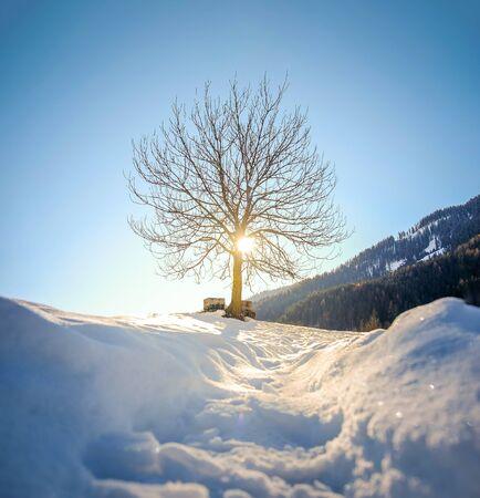 pov snow tree silhouette backlight through branches Stock Photo