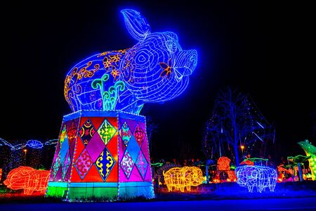 pig in chinese zodiac animals at lantern festival background