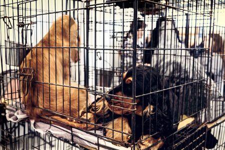 captivity dogs caged abandoned background