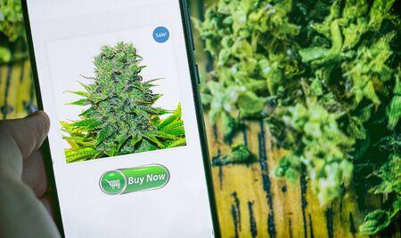 cannabis light online shop buy ganja light with smartphone. Фото со стока