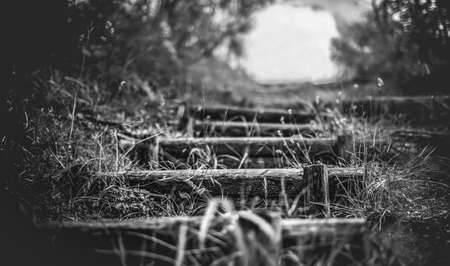 steps in the nature country trail landscapes black and white background horizontal