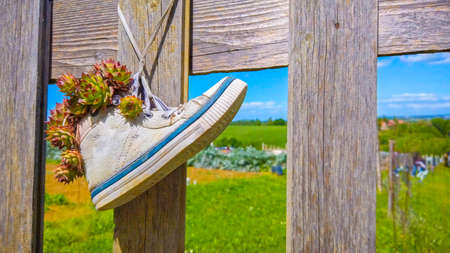 hang white sneakers shoes to fence - hipster shoes reuse in natural background