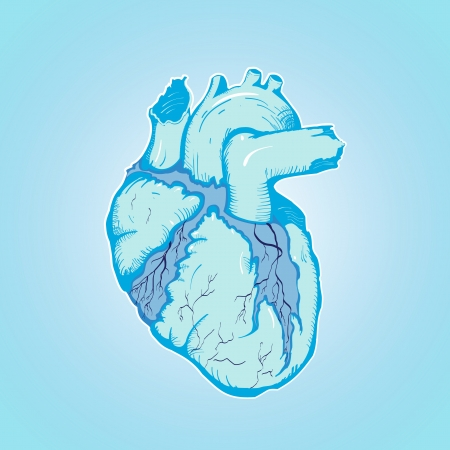 ventricles: heart of ice human blue with Veins and Ventricles