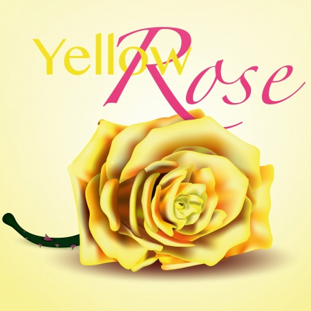 copy spase: Card with Yellow Rose on Background
