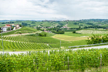 panorama of the Langhe hills with many vineyards