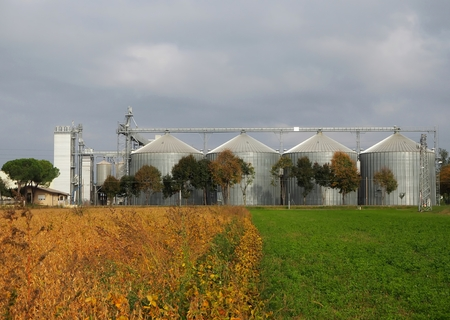 Grain silos behind a row of trees and a field divided between the yellow of autumn cultivations and the green grass