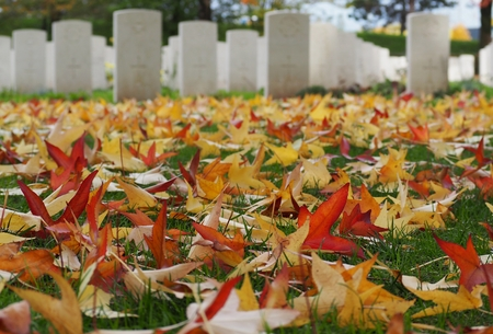 Multicolored leaves on a blurred background. Commonwealth war cemetery on background.