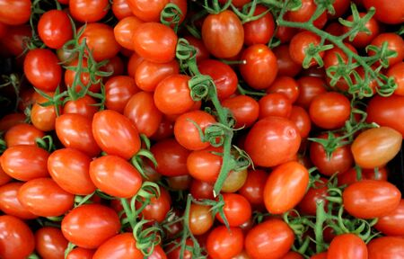 Small red italian tomatoes called Datterini, with branches and little leaves. Top view, food background