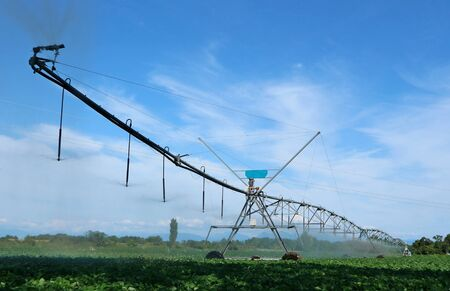 Center pivot irrigation system waters a soybean field on a summer sunny day
