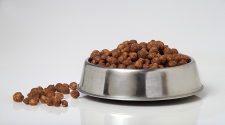 dog food bowl Stock Photo - 14513479