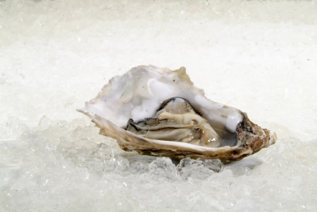 open oysters on ice photo