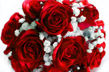 Bouquet of red roses, on a white background