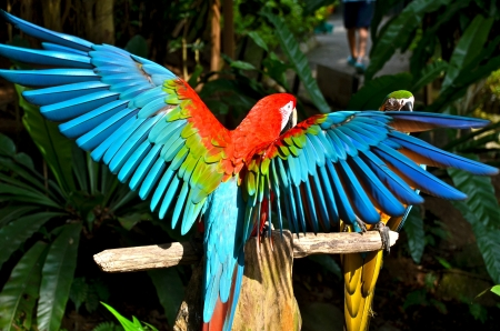 A colourful parrot