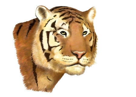 tiger, illustration, isolated in withe back ground