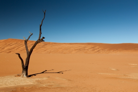 Burnt tree. Sand dunes in the desert. Blue sky. No other objects. Namibia. Africa. Stock Photo
