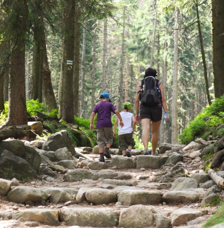 The two little boys and mother walking through the green forest. Stock Photo - 15312063
