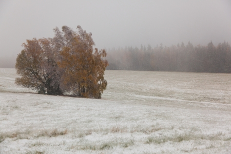 Tree with brown leaves. Meadow covered with snow. Fog. Stock Photo