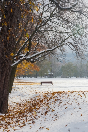 Vertical view of the snow-covered park. Lonely bench. Brown leaves on the trees and the snow.