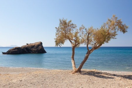 The beach near Preveli Beach. Greece. Crete. Beach, small tree, rock and blue sky.
