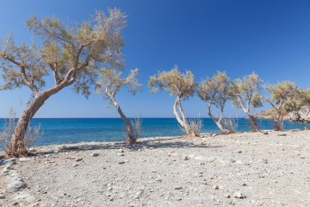The beach near Preveli Beach. Greece. Crete. Beach, small trees and blue sky. Stock Photo