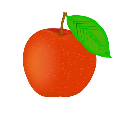 Ripe orange peach - vector illustration   Vector
