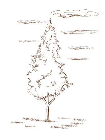 hedge trees: Thuja  - hand drawn