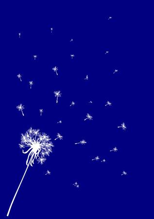 flimsy: Dandelion background