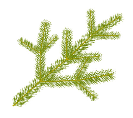 twig: Spruce twig. Illustration