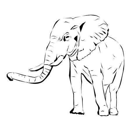 Elephant Çizim