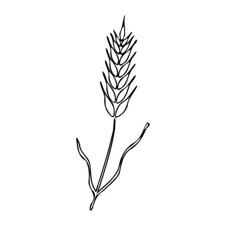 Silhouette with ear of wheat