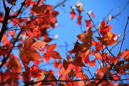 Maple Leaf Stock Photo - 17354293