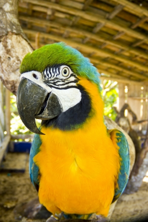 Aimal theme: Blue and yellow macaw close-up