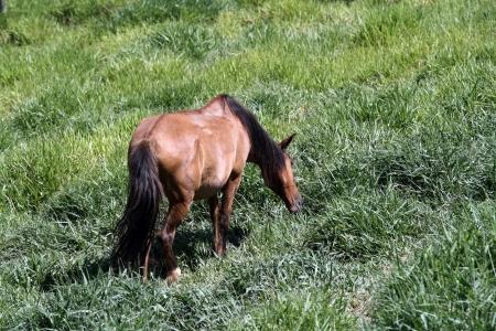 ruminate: A farm theme: Pawed mammal Stock Photo