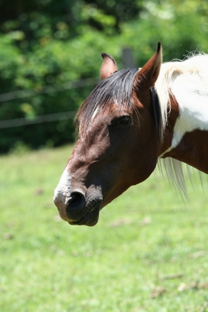 ruminate: A farm theme: Horse head Stock Photo