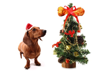 dogs christmas tree with bone on the top on white background stock photo 18581230