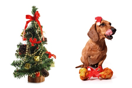 Canine Christmas on white background photo