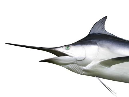 swordfish: Photo of Marlin - Swordfish Stock Photo