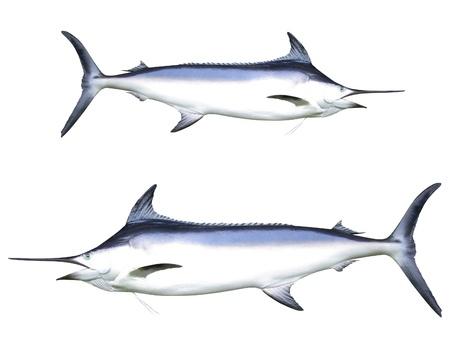 Photo of Swordfish