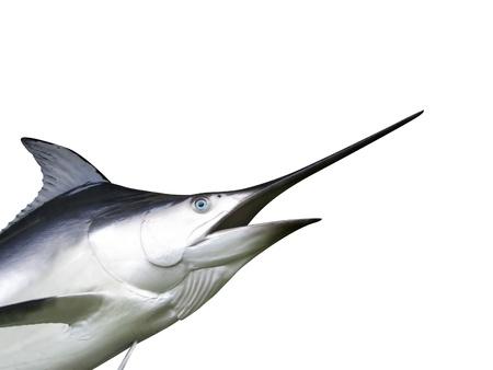 Photo of Marlin fish - Swordfish Standard-Bild