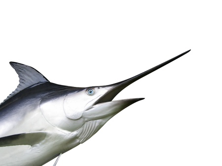 Photo of Marlin fish - Swordfish Stock Photo