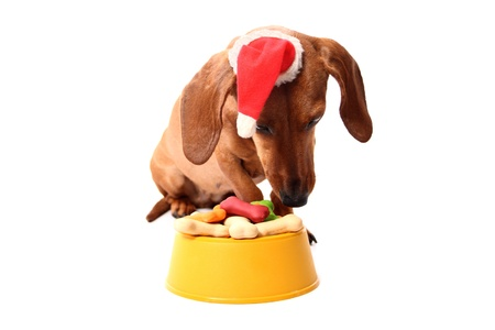 An isolated dachshund dog wearing a santa's hat with a delicious bowl full of dog treats on a white background. photo