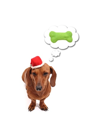 A dog thinking about its christmas gift. Stock Photo - 18598849