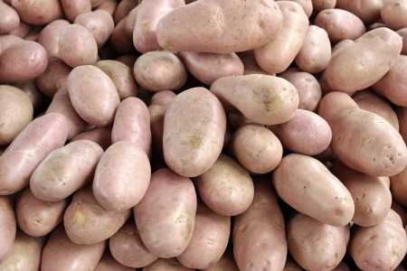 A food theme: Pink Potatoes Stock Photo - 18601209