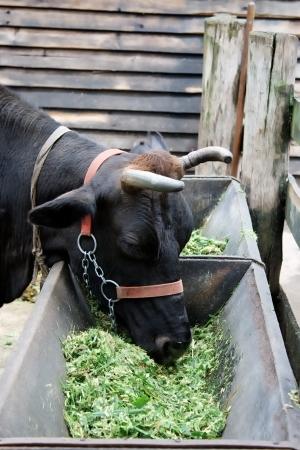 A farm theme: Farm day