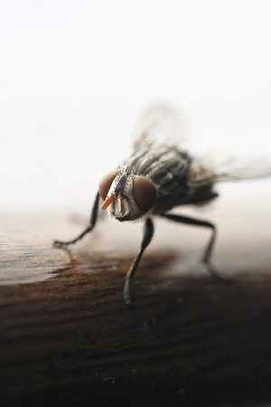transmissible: Photo of Ugly fly