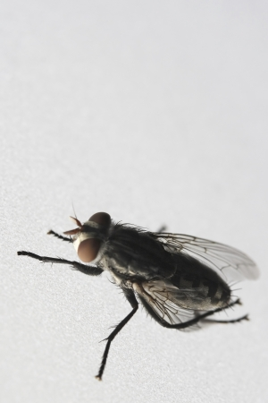 transmissible: Photo of Fly