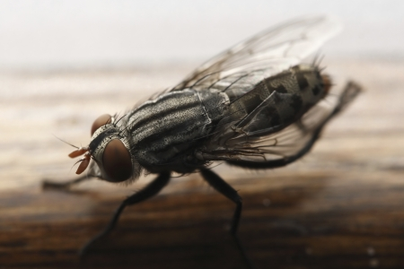 transmissible: Photo of Closeup Fly Stock Photo