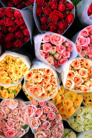 clr: Flower theme: Colored roses - Top view