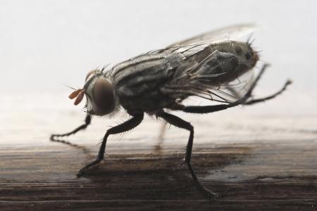 transmissible: Photo of Mosquito Stock Photo